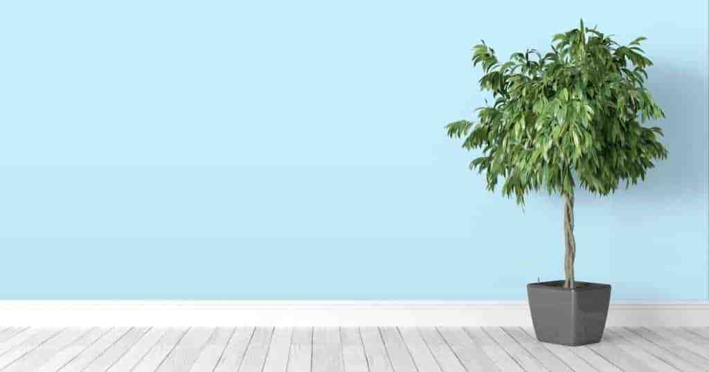 How to Keep a Green Home for Less