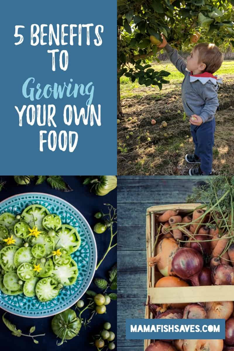 Benefits of Growing Your Own Food