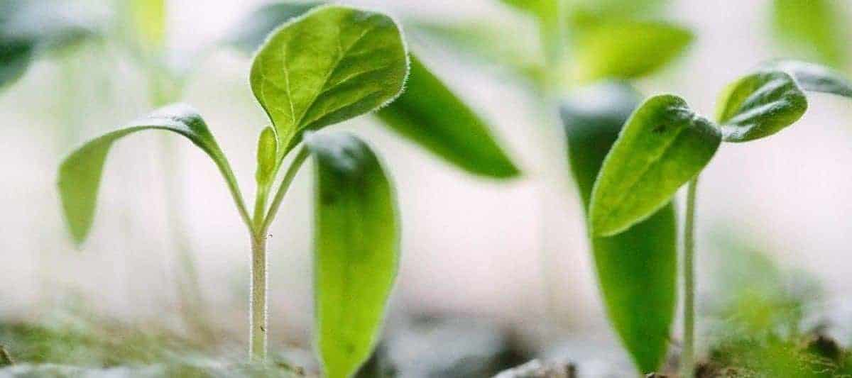 5 Benefits to Growing Your Own Food