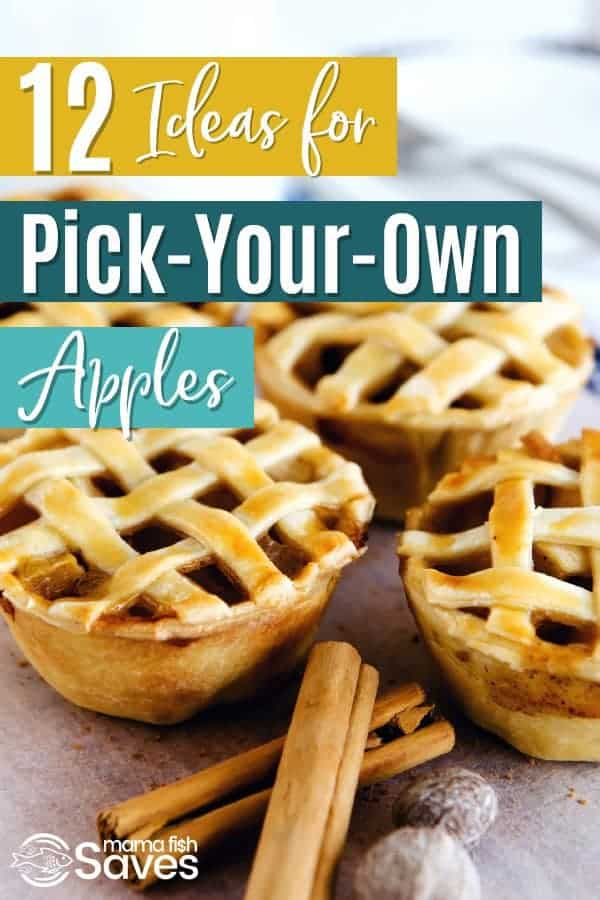 Best apple recipes for fall | Ideas for pick-your-own apples | What to do with apples | Preserving apples | Canning and freezing apple recipes #fallrecipes