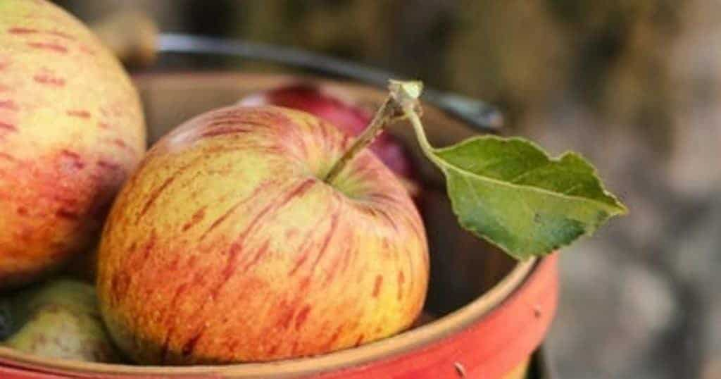 Best apple recipes for fall