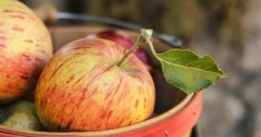 Apples This Fall