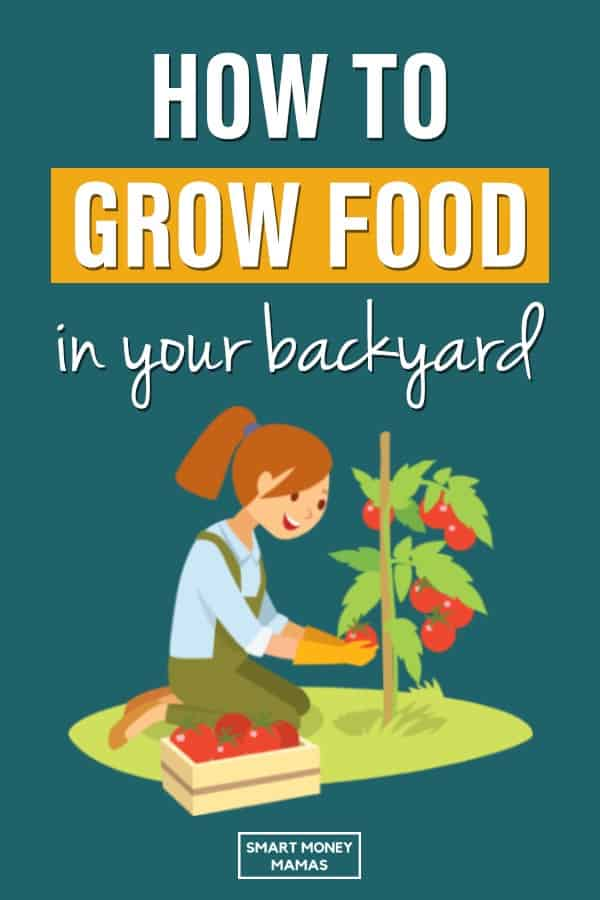 Reconnect with nature, save money, and eat healthier by growing your own food in your backyard, no matter where you live. Everything you need to know about gardening, chickens, and preserving your crops #homesteading #growfoodnotlawns #growyourown #organicfood #eatlocal #smartmoneymamas