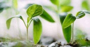 Growing Own Food