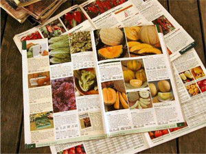 Seed catalogs open on a table