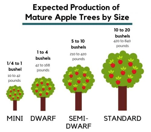 Fruit Tree Production
