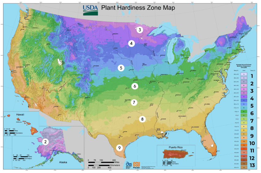 Hardiness Zone Numbers