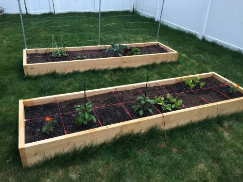 Early season square foot garden bed divided into squares